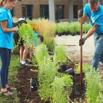 Volunteers planting trees